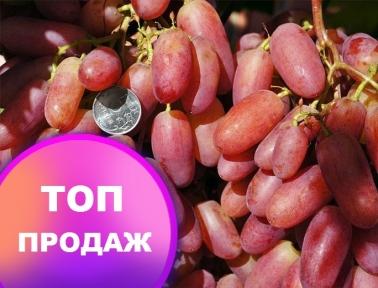 Виноград Юбилей Новочеркасска